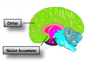 Círculo vicioso y córtex